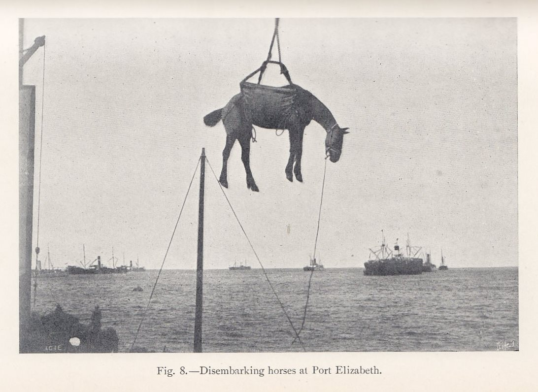 Photo of transatlantic horse trade: horse in sling being loaded onto ship