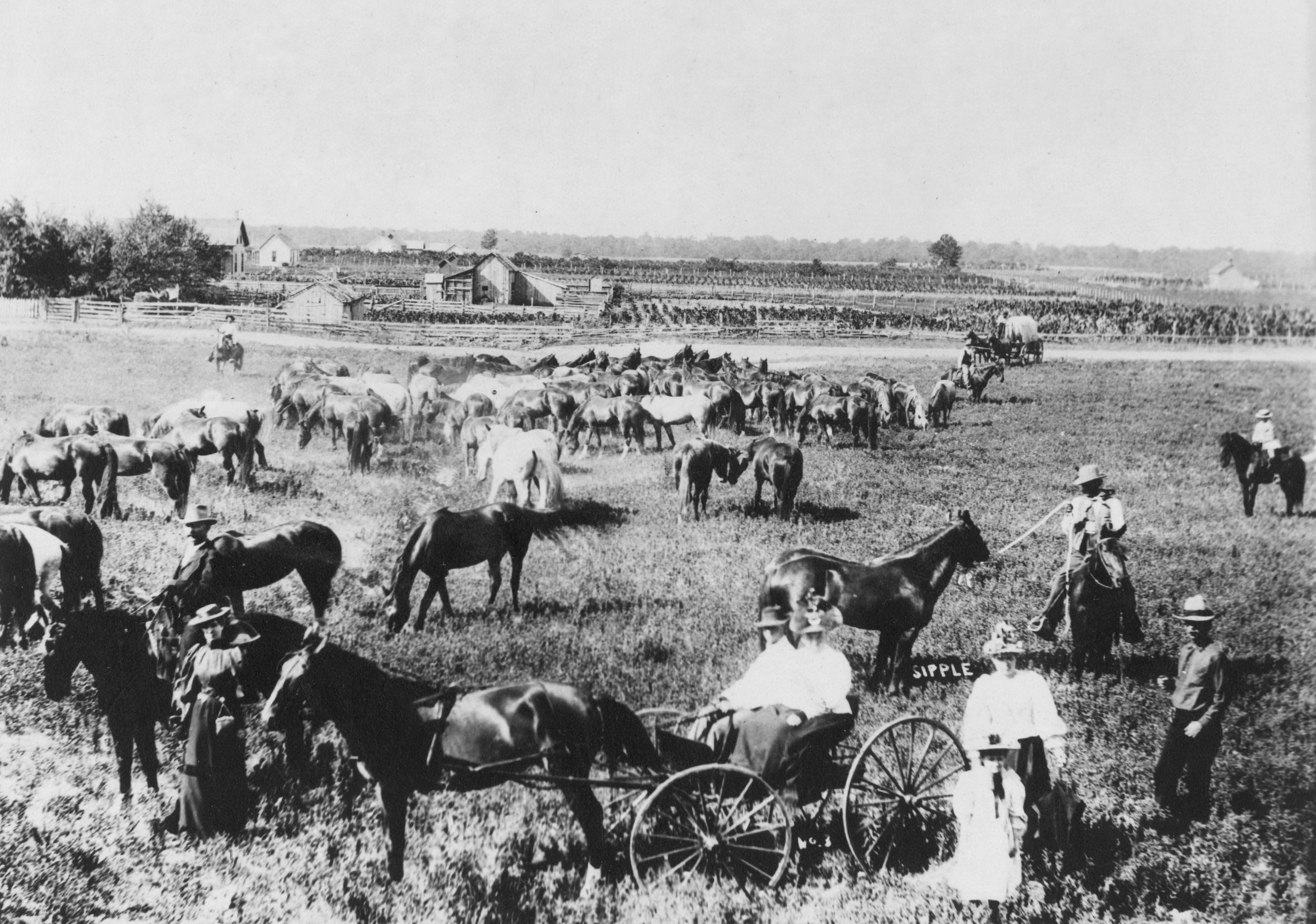 photo of horses and people at Wilkins Ranch, Bruneau Valley, Owyhee County, ID, ca. 1900
