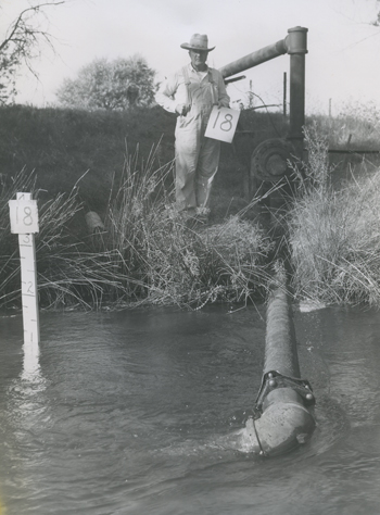 Farmer standing next to river with irrigation pipe, undated.  Rank vs. Krug collection.
