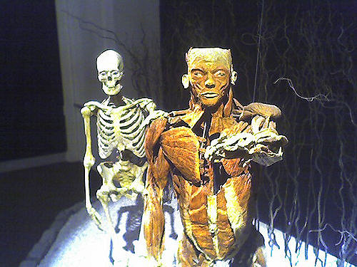 a photo of a skeleton that stands behind the muscles that did surround it