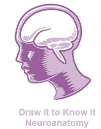 Draw it to Know it Neuroanatomy logo