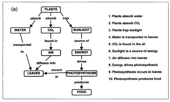 A flowchart/linear map showing the singular process in which a plant photosynthesizes.