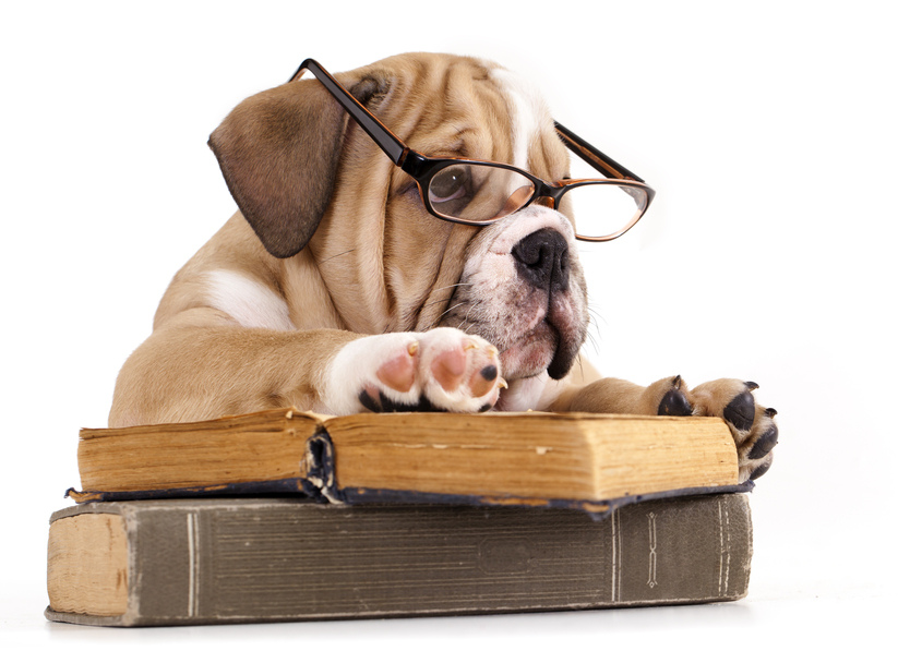 cute dog wearing glasses on top of books