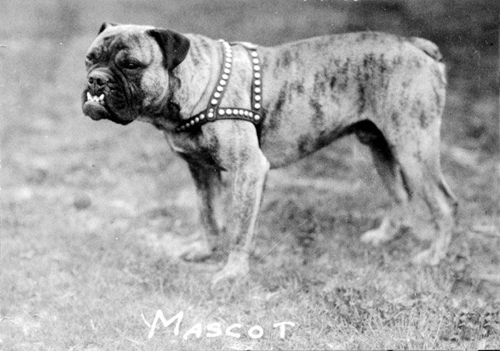 GU mascot, name unknown, circa 1930