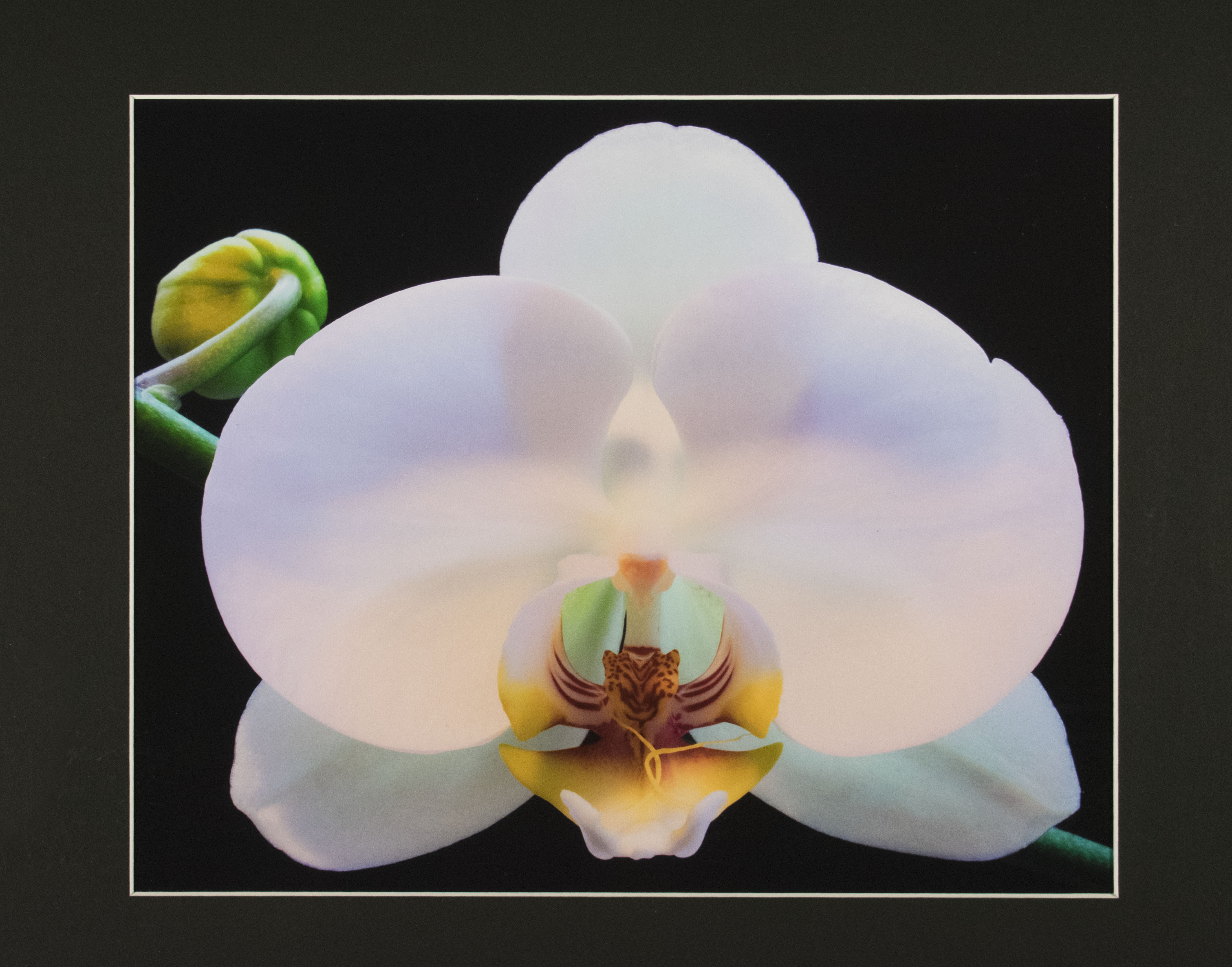 photograph of an orchid