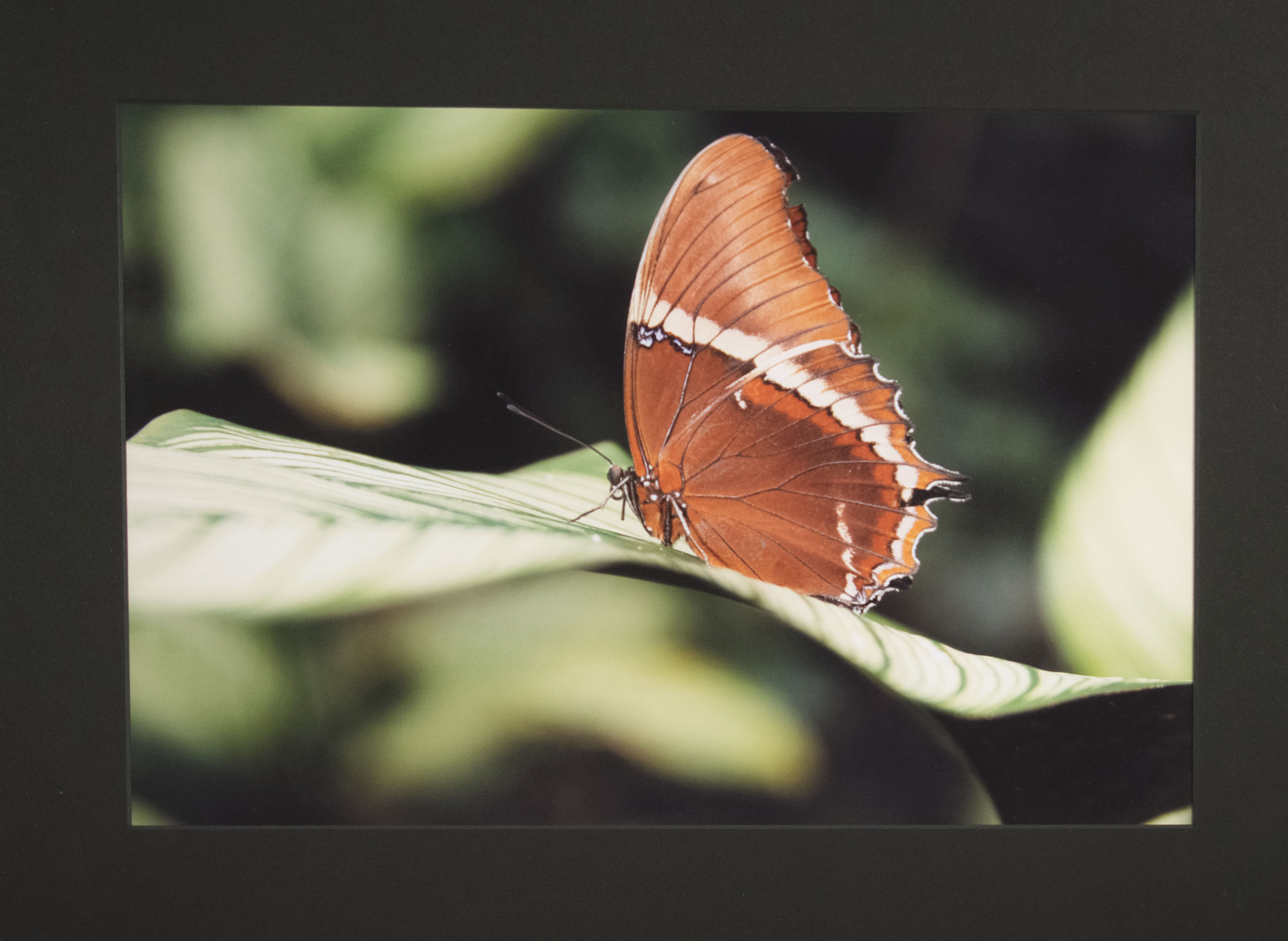 photograph of an orange butterfly on a leaf