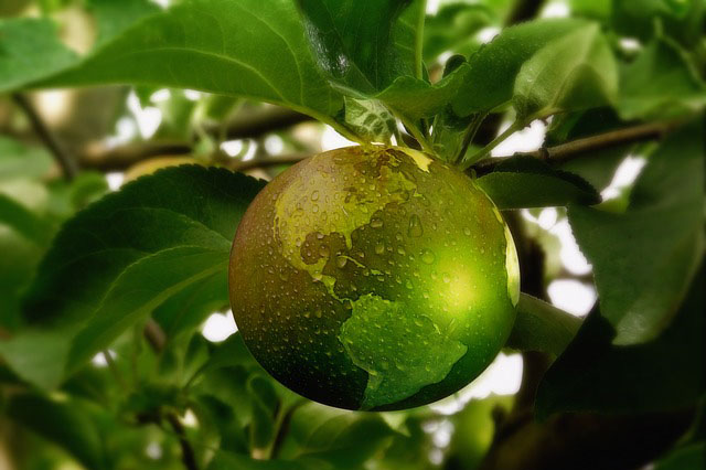 "Green Earth ""Fruit"" Hanging from Tree"