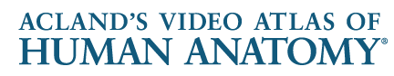 Acland's Video Atlas Logo
