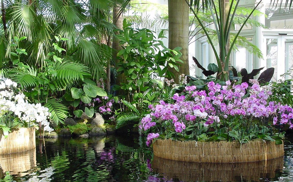 Orchids on display in the Palm House Pool