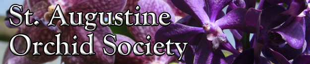 St Augustine Orchid Society