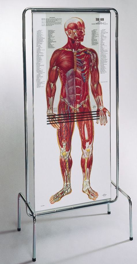 anatomy chart with multiple layers