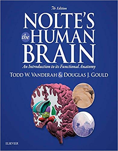 Noltes the human brain