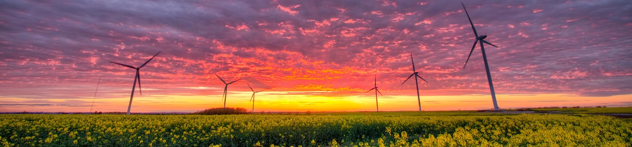 Sunset over a field with wind turbines.