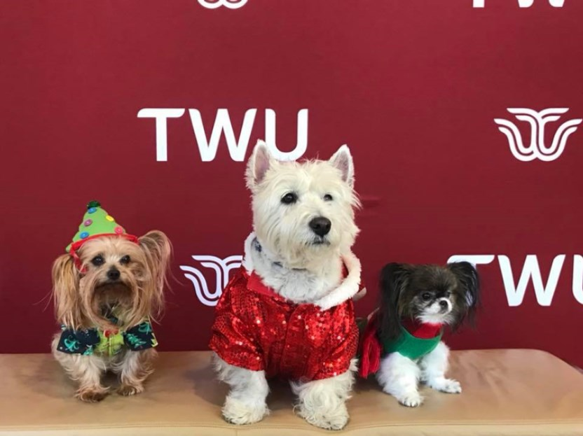 Houston Therapy Dogs Visit