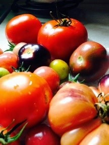 heirloom tomatoes in colors and shapes