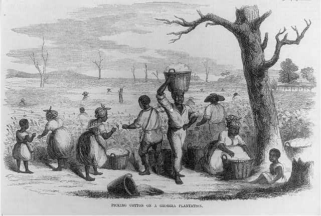 Illlustration of enslaved black people picking cotton