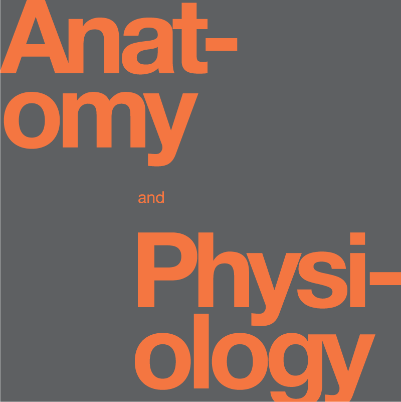 anatomy and physiology words