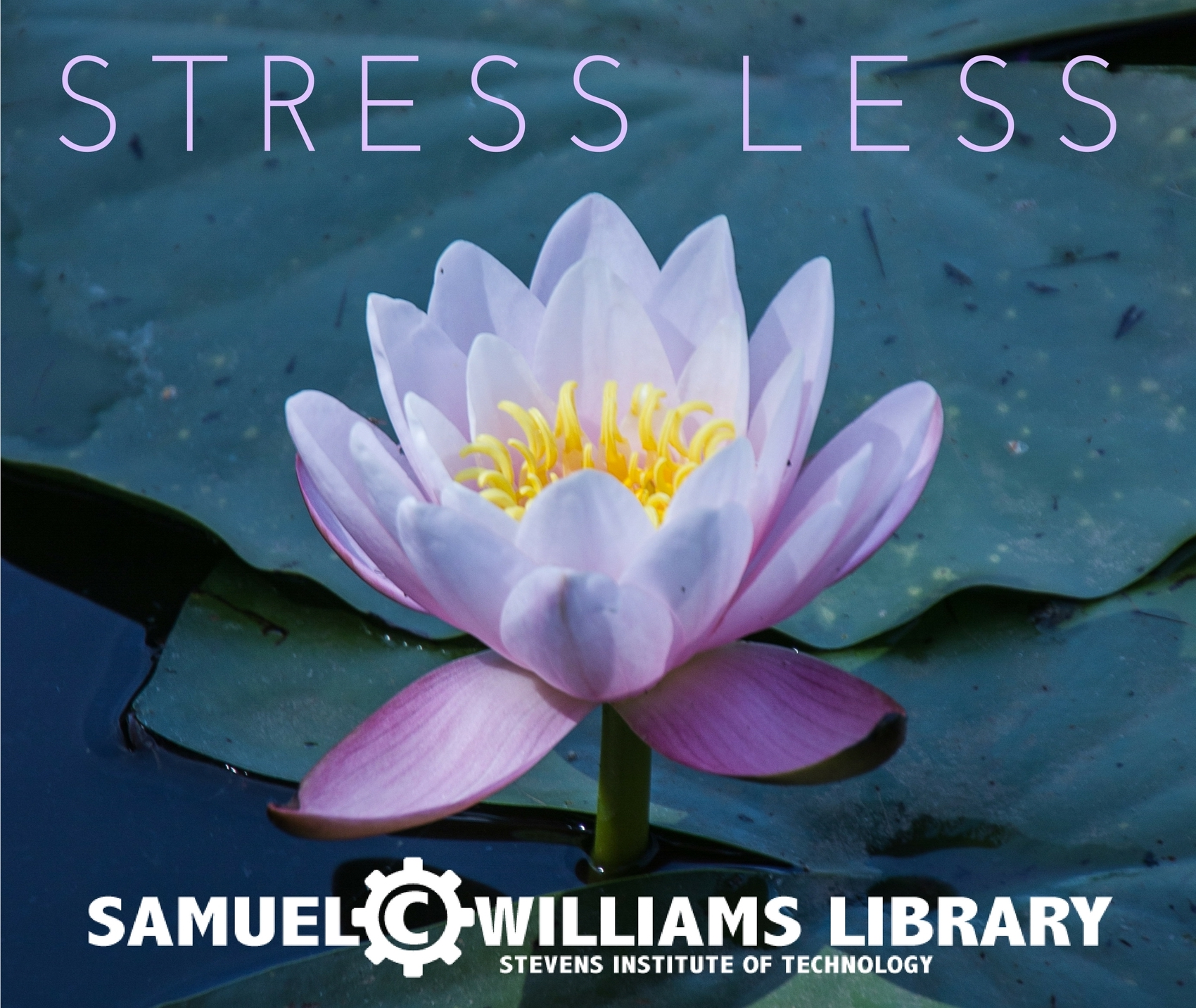 Stress Less at SCW Library