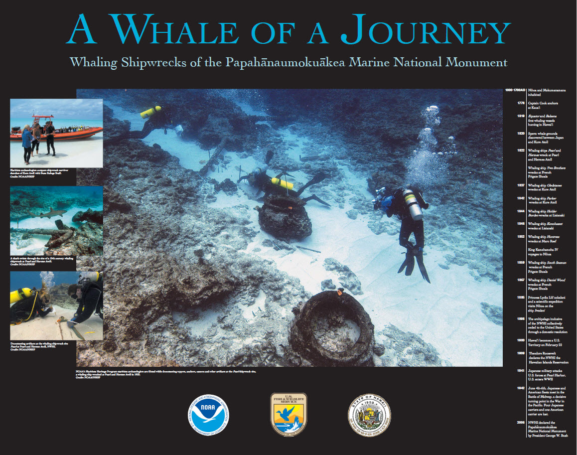 A Whale of a Journey poster