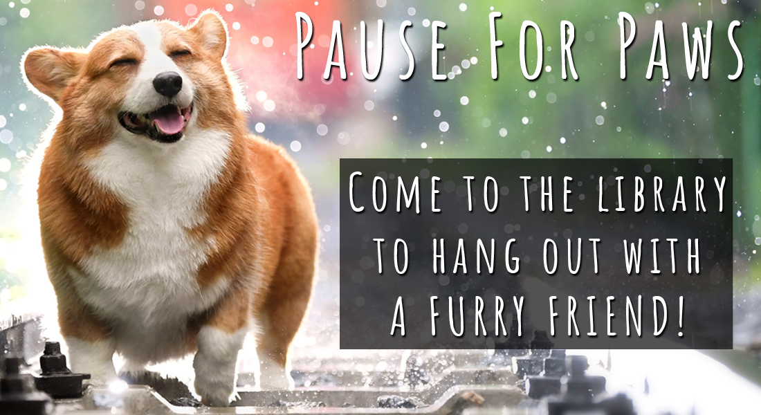pause for paws. come to the library to hang out with a furry friend