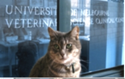 Veterinary and Agricultural Science Libraries link