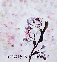 Watercolor by Nina Boutin (Cherry blossoms)