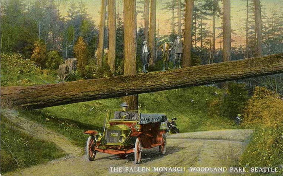 Postcard: Automobile and fallen tree across road, Woodland Park