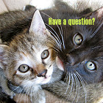 Kittens asking Have a question?