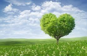 heart-shaped tree in a field