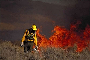 Solutions to wildfires image