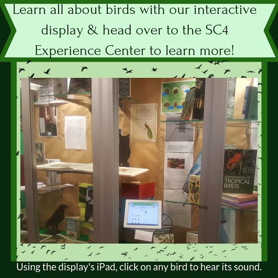 experience center display