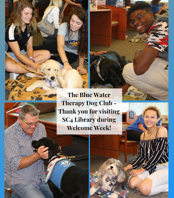 blue water therapy dogs