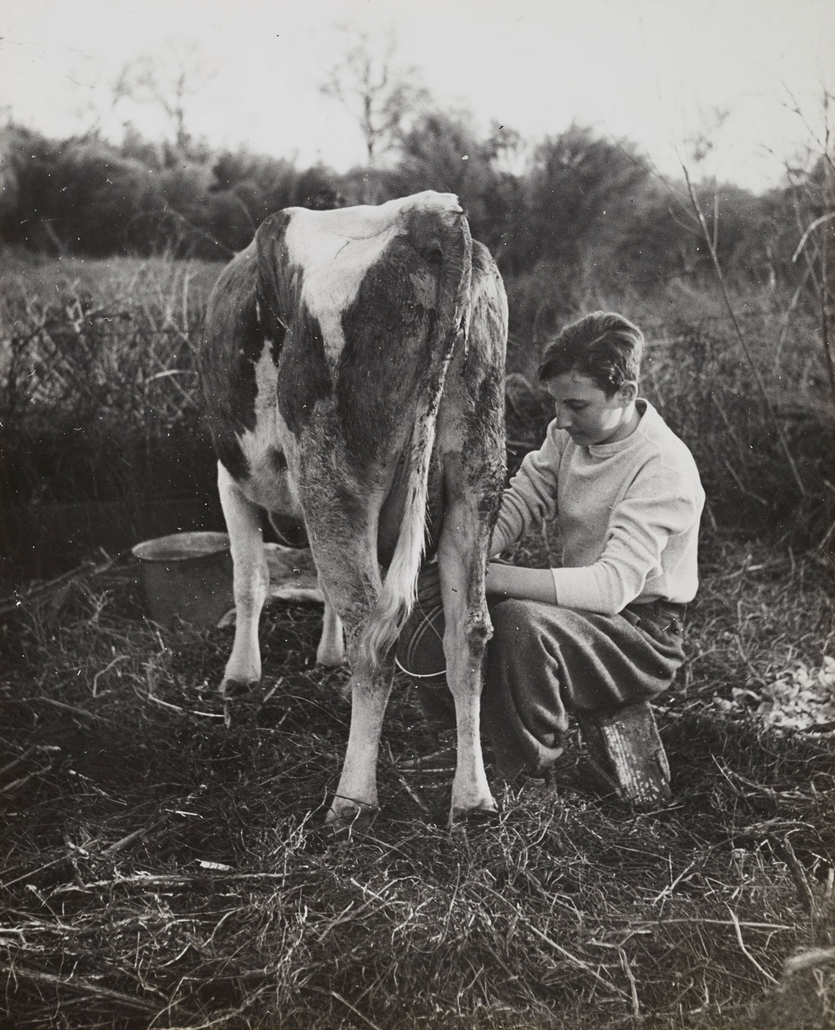 Fred Loeb milking a cow