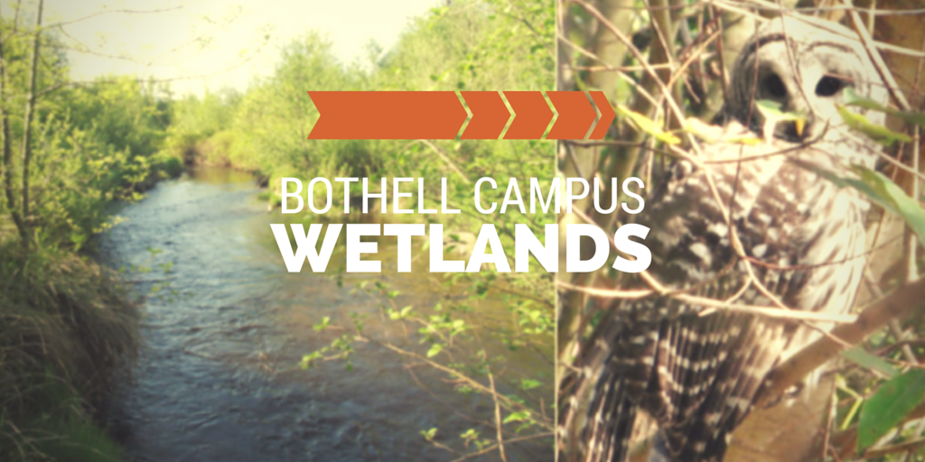 UW Bothell Cascadia College Wetlands Collection