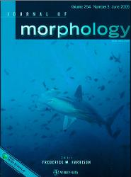 Image of the cover of Journal of Morphology depicting a shark swimming amongst fish.