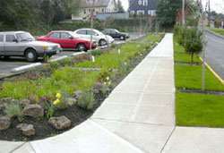 Bioretention rain garden near parking lot