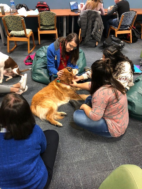 photo of students taking a break from studying to pet therapy dogs