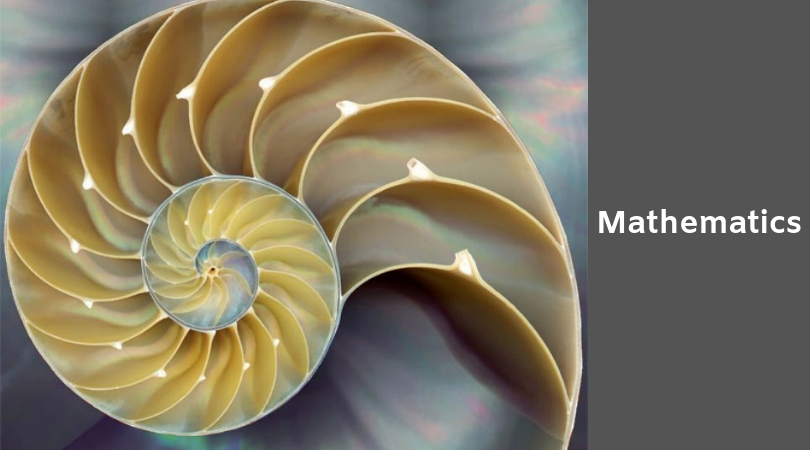 photo of a Fibonacci spiral in a nautilus shell