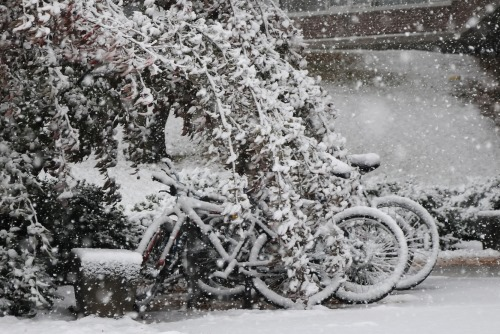 snow covered bicycles winter