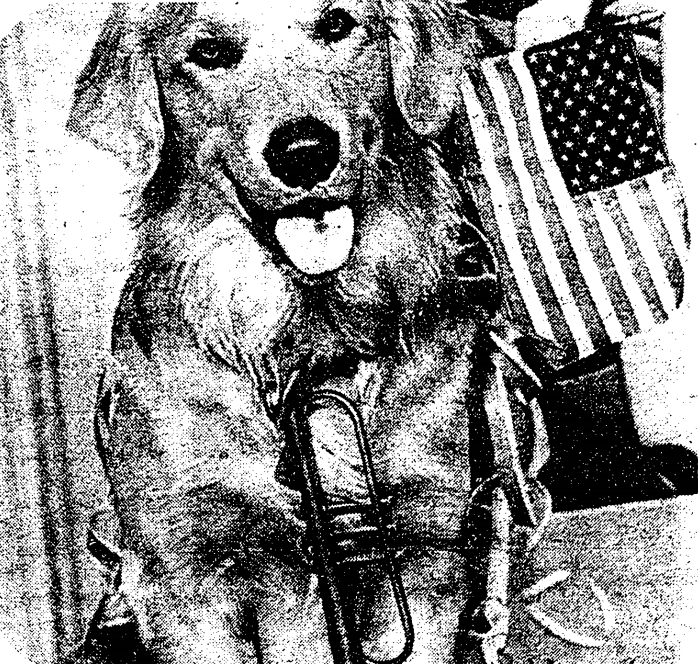 Dog with patriotic US Flag and Bugle