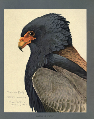 Bateleur painting from 1927