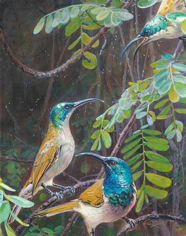 painting of Green-headed Sunbirds