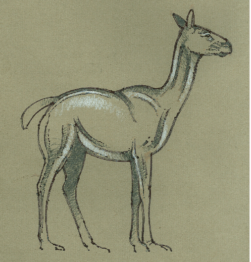 Extinct Large-headed Llama
