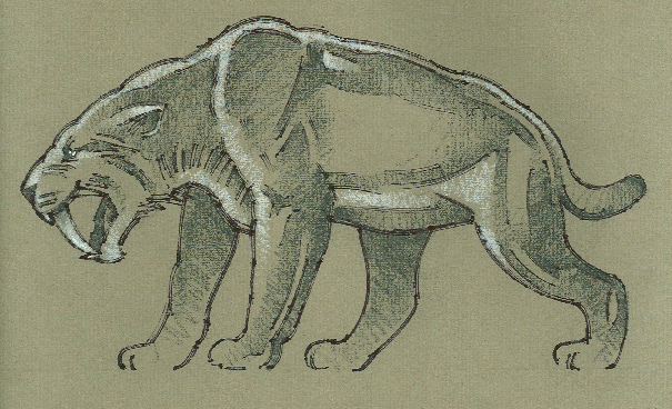 Extinct Saber-tooth Cat