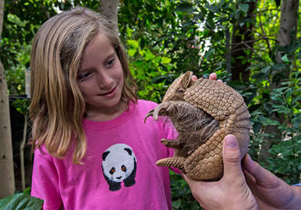 Young girl with armadillo at San Diego Zoo