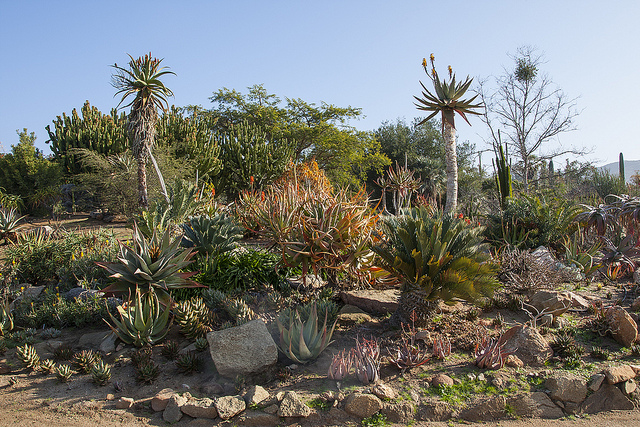 baja garden at the San Diego Zoo Safari Park
