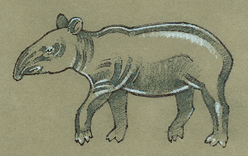 Extinct California Tapir