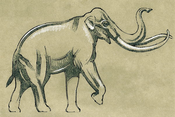Extinct Columbian Mammoths, fact sheet, SDZG