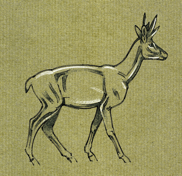 Extinct Dwarf Pronghorn