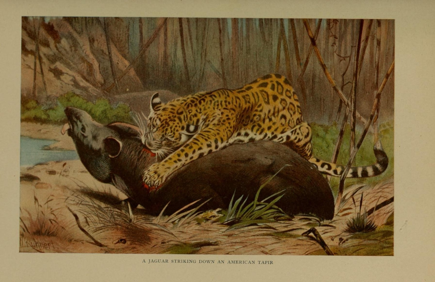 Painting of a Jaguar